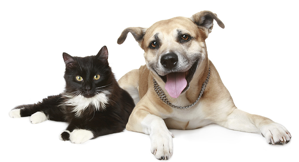 Your pets will be much happier when Dr Gary visits them