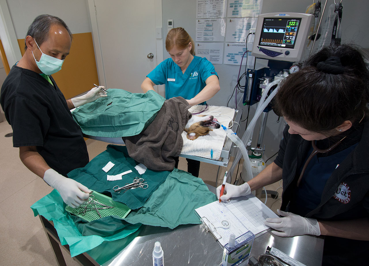 Animal Happiness Mobile Vet Perth is backed by our full service veterinary hospital