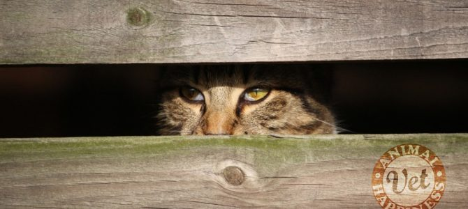 The cat that always hides is a deeply unhappy cat