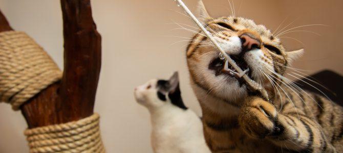 Making cats insanely happy